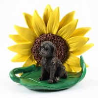 Labradoodle Chocolate Sunflower Friend
